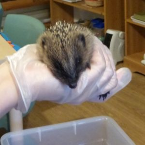 Hedgehog sanctury visit to Wharfedale Monetssori